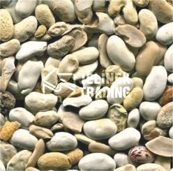 Odpad po třídění fazolí